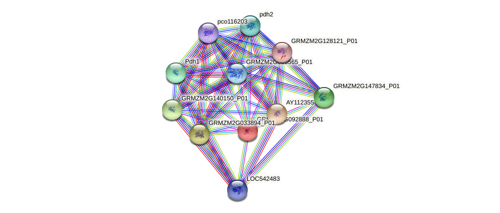 103635536 protein (Zea mays) - STRING interaction network