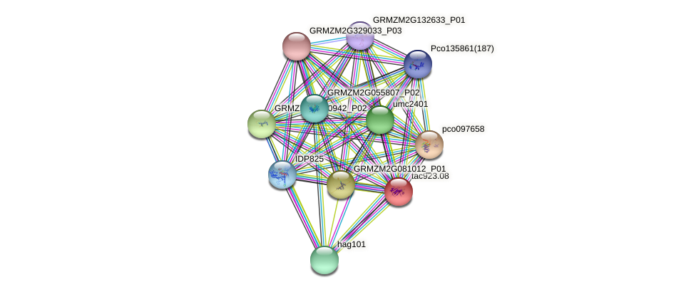 GRMZM2G092916_P01 protein (Zea mays) - STRING interaction network