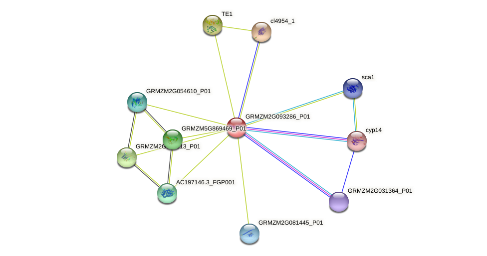 GRMZM2G093286_P01 protein (Zea mays) - STRING interaction network