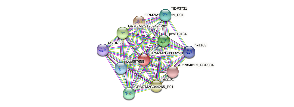 GRMZM2G093325_P04 protein (Zea mays) - STRING interaction network
