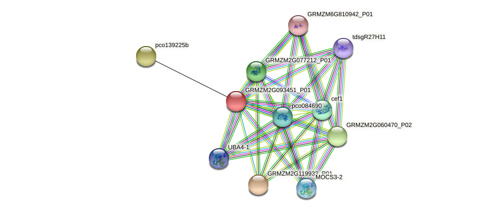 GRMZM2G093451_P01 protein (Zea mays) - STRING interaction network