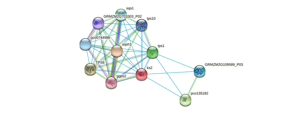 GRMZM2G093526_P01 protein (Zea mays) - STRING interaction network