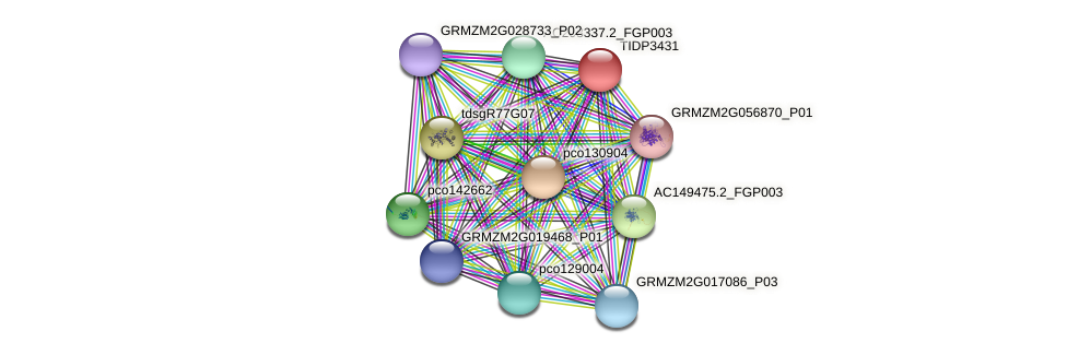 TIDP3431 protein (Zea mays) - STRING interaction network
