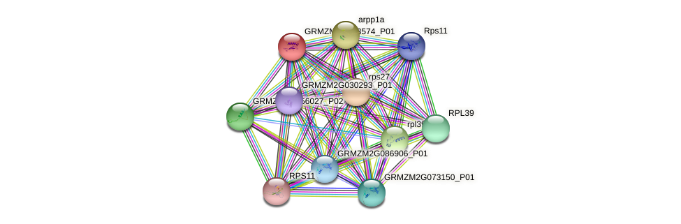 GRMZM2G093574_P01 protein (Zea mays) - STRING interaction network