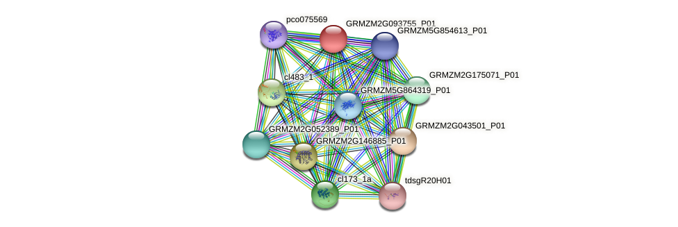 Zm.143411 protein (Zea mays) - STRING interaction network