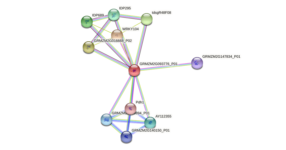 GRMZM2G093776_P01 protein (Zea mays) - STRING interaction network