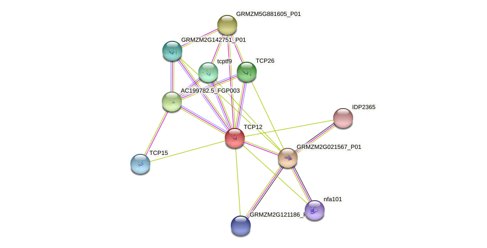 TCP12 protein (Zea mays) - STRING interaction network