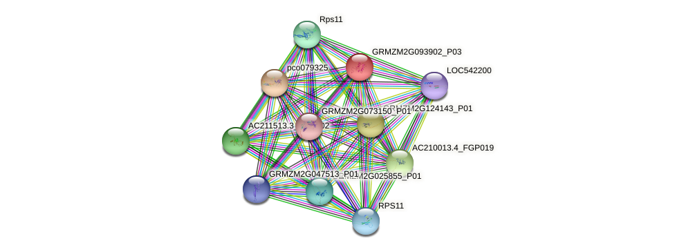 GRMZM2G093902_P02 protein (Zea mays) - STRING interaction network