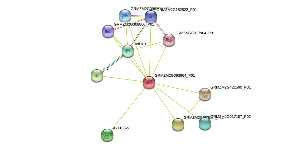 GRMZM2G093964_P01 protein (Zea mays) - STRING interaction network