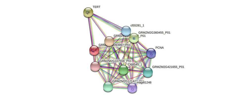 GRMZM2G093997_P01 protein (Zea mays) - STRING interaction network