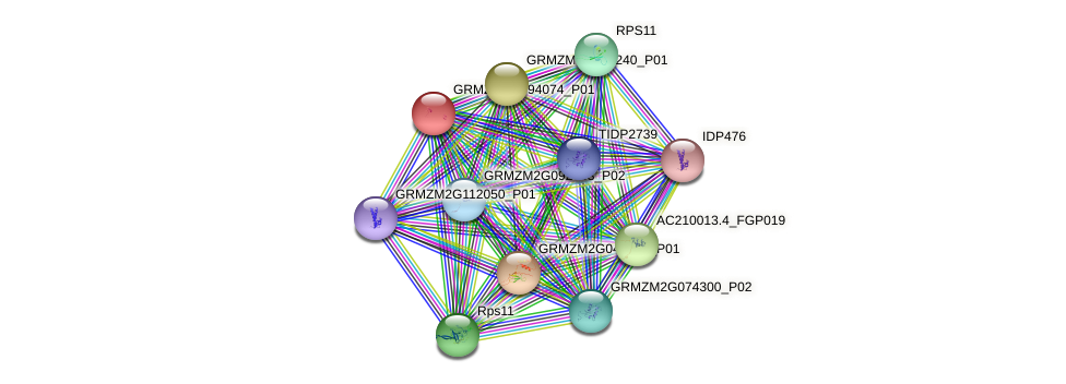 pco069156 protein (Zea mays) - STRING interaction network