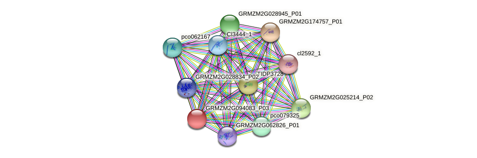 GRMZM2G094083_P03 protein (Zea mays) - STRING interaction network