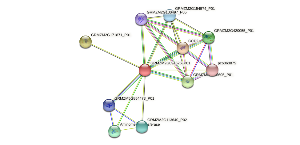 GRMZM2G094526_P01 protein (Zea mays) - STRING interaction network