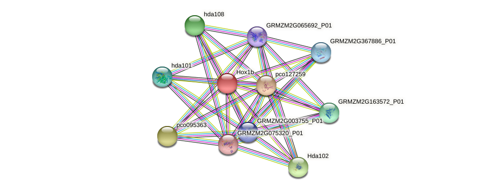 Zm.82145 protein (Zea mays) - STRING interaction network