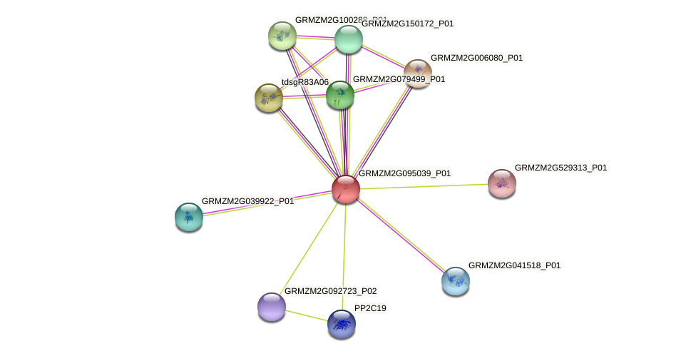 GRMZM2G095039_P01 protein (Zea mays) - STRING interaction network