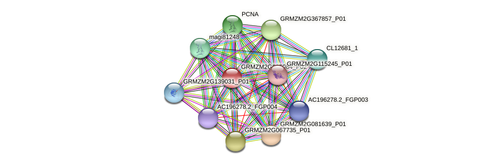 GRMZM2G095084_P02 protein (Zea mays) - STRING interaction network