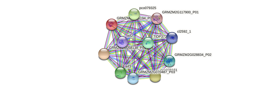 GRMZM2G095194_P01 protein (Zea mays) - STRING interaction network