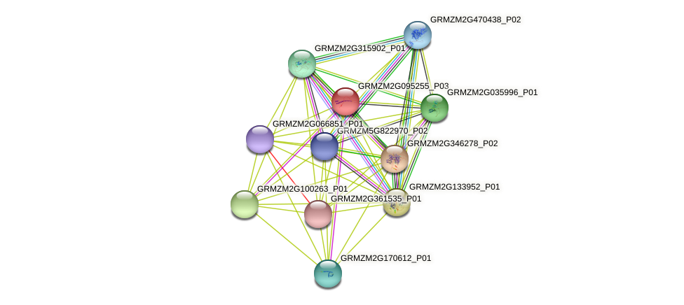 GRMZM2G095255_P03 protein (Zea mays) - STRING interaction network