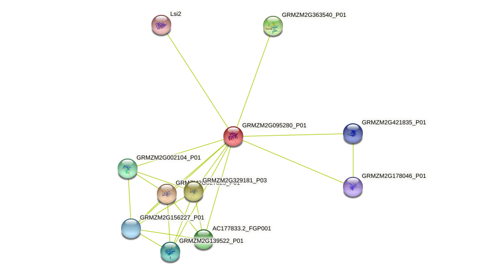GRMZM2G095280_P01 protein (Zea mays) - STRING interaction network