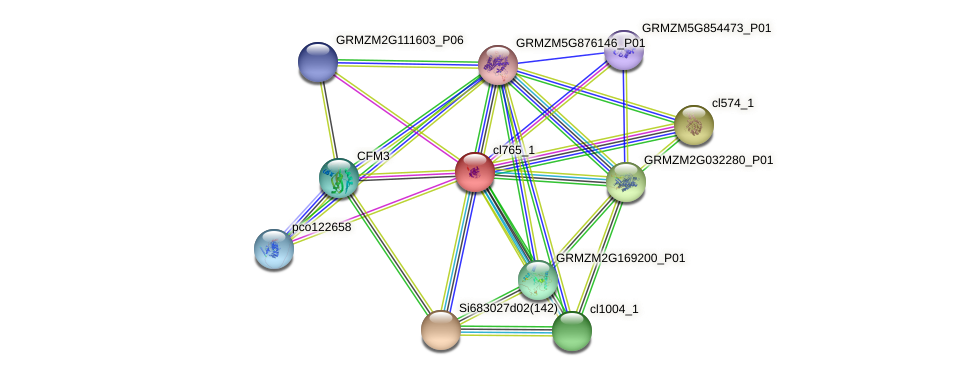 cl765_1 protein (Zea mays) - STRING interaction network