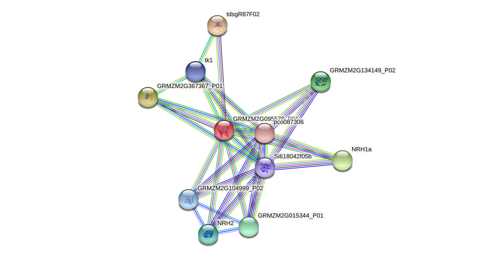 GRMZM2G095576_P01 protein (Zea mays) - STRING interaction network
