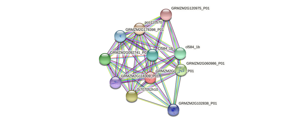 GRMZM2G095643_P01 protein (Zea mays) - STRING interaction network