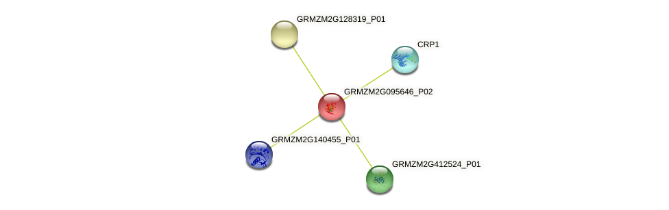 GRMZM2G095646_P02 protein (Zea mays) - STRING interaction network