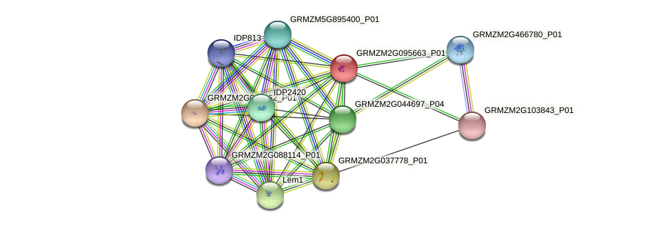 GRMZM2G095663_P01 protein (Zea mays) - STRING interaction network
