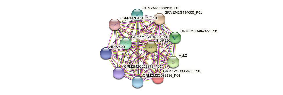 GRMZM2G095670_P01 protein (Zea mays) - STRING interaction network