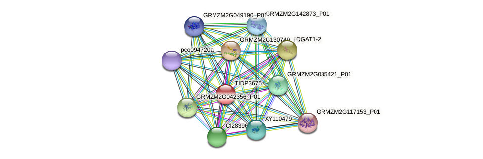 TIDP3675 protein (Zea mays) - STRING interaction network