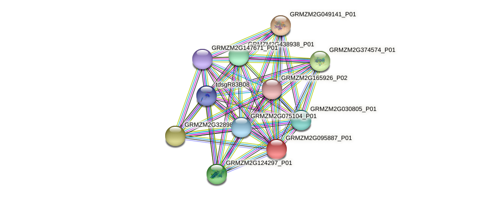 GRMZM2G095887_P01 protein (Zea mays) - STRING interaction network