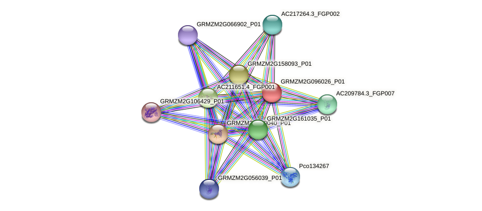 GRMZM2G096026_P01 protein (Zea mays) - STRING interaction network