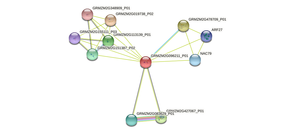 100381944 protein (Zea mays) - STRING interaction network