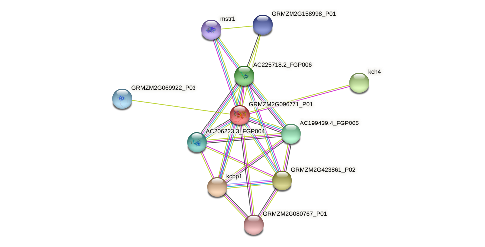 GRMZM2G096271_P01 protein (Zea mays) - STRING interaction network