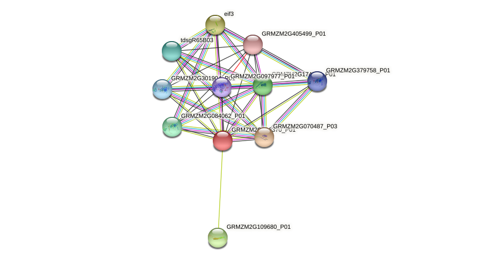 GRMZM2G096370_P01 protein (Zea mays) - STRING interaction network