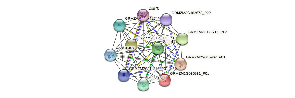 GRMZM2G096391_P01 protein (Zea mays) - STRING interaction network