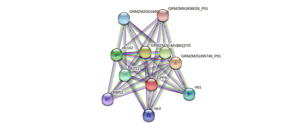 CPP8 protein (Zea mays) - STRING interaction network