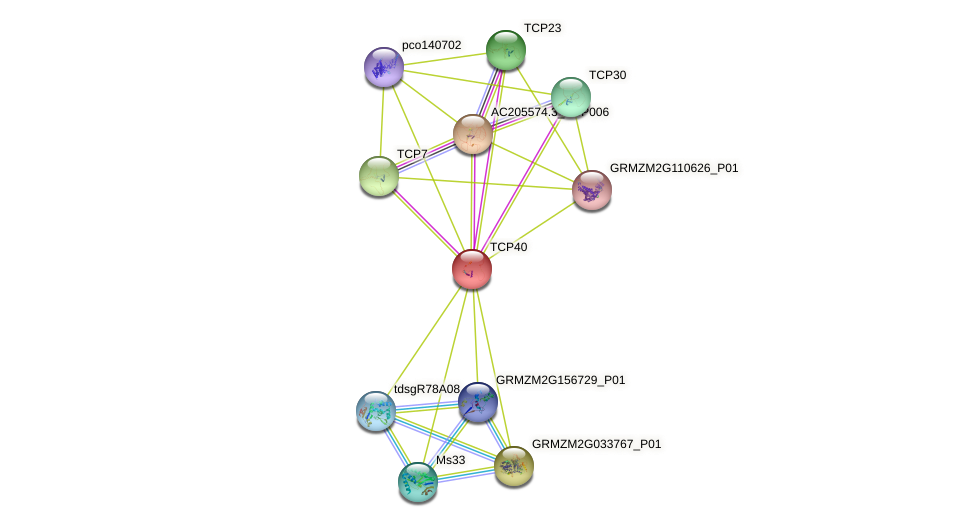 TCP40 protein (Zea mays) - STRING interaction network