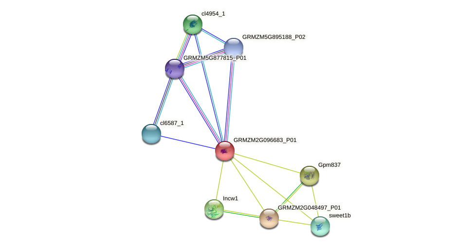 Zm.64930 protein (Zea mays) - STRING interaction network