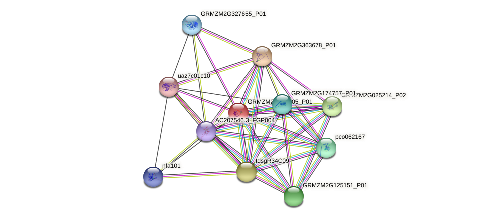 GRMZM2G096705_P01 protein (Zea mays) - STRING interaction network