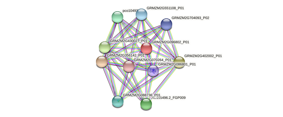 GRMZM2G096802_P01 protein (Zea mays) - STRING interaction network