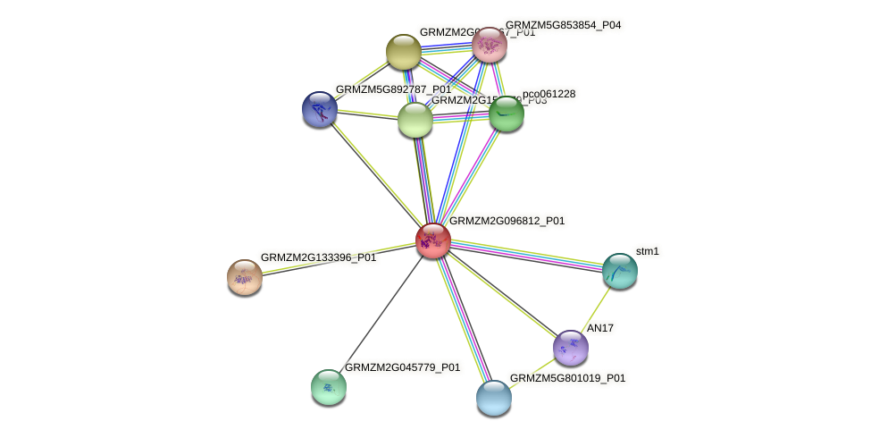 GRMZM2G096812_P01 protein (Zea mays) - STRING interaction network