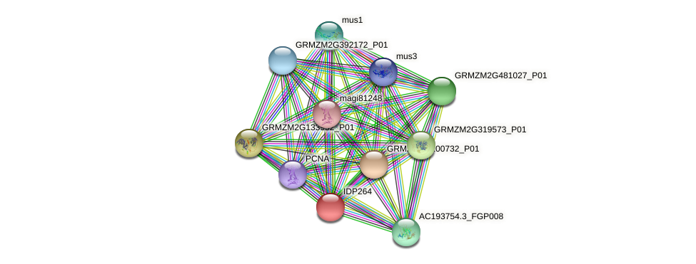 IDP264 protein (Zea mays) - STRING interaction network