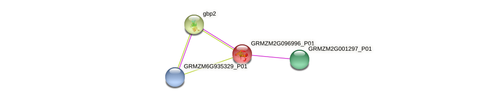 GRMZM2G096996_P01 protein (Zea mays) - STRING interaction network
