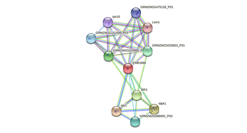 GRMZM2G097106_P01 protein (Zea mays) - STRING interaction network