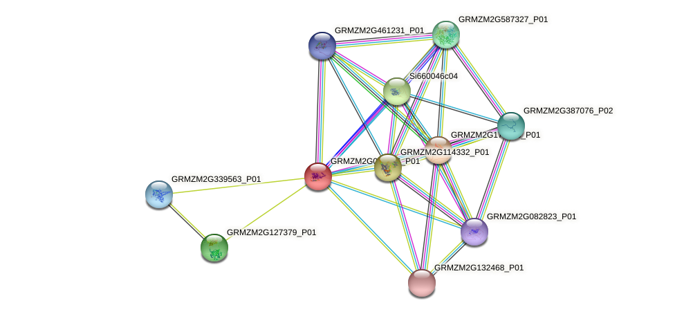 GRMZM2G097286_P01 protein (Zea mays) - STRING interaction network