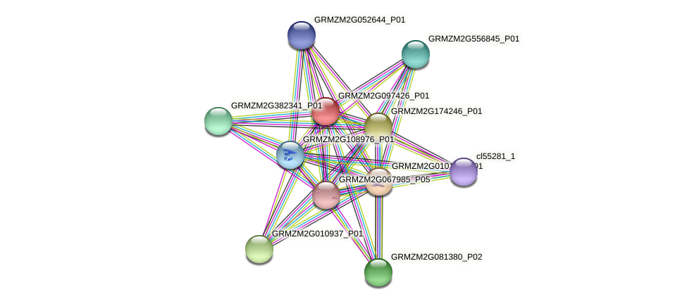 GRMZM2G097426_P01 protein (Zea mays) - STRING interaction network