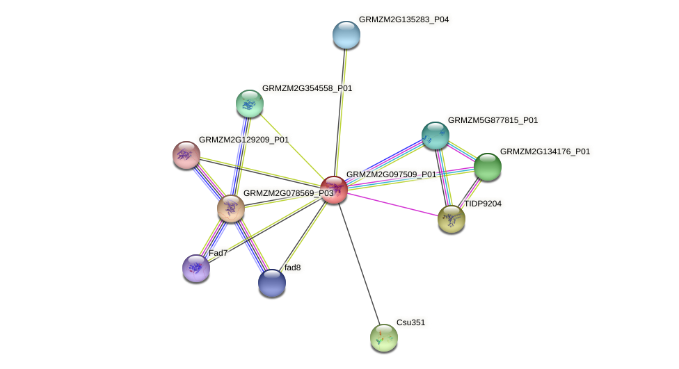 GRMZM2G097509_P01 protein (Zea mays) - STRING interaction network