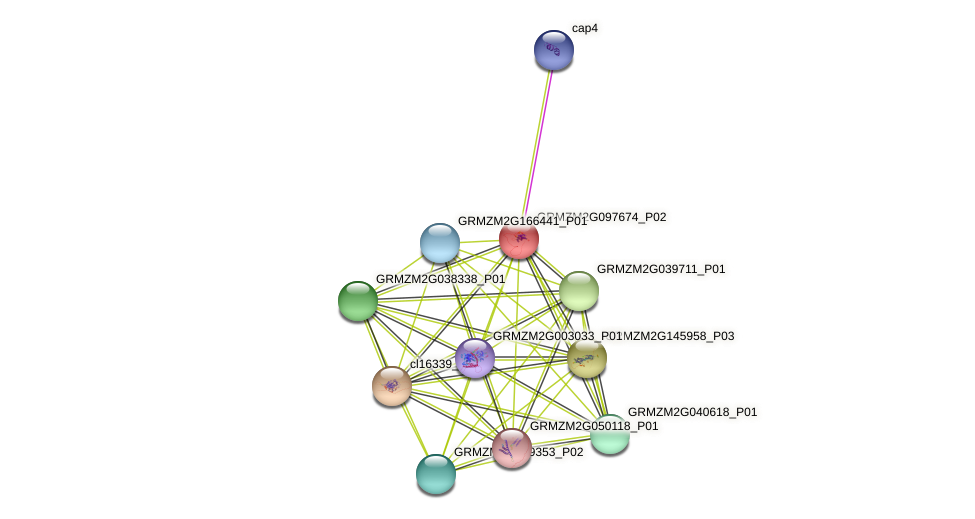 GRMZM2G097674_P01 protein (Zea mays) - STRING interaction network