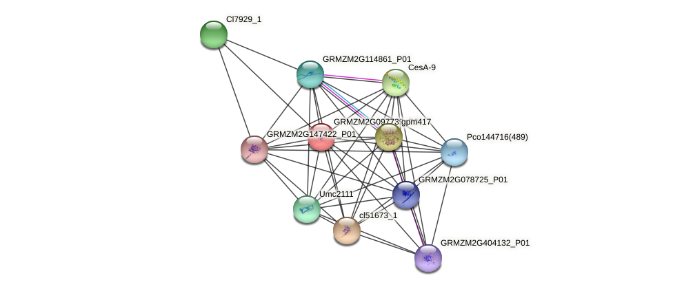 GRMZM2G097739_P01 protein (Zea mays) - STRING interaction network